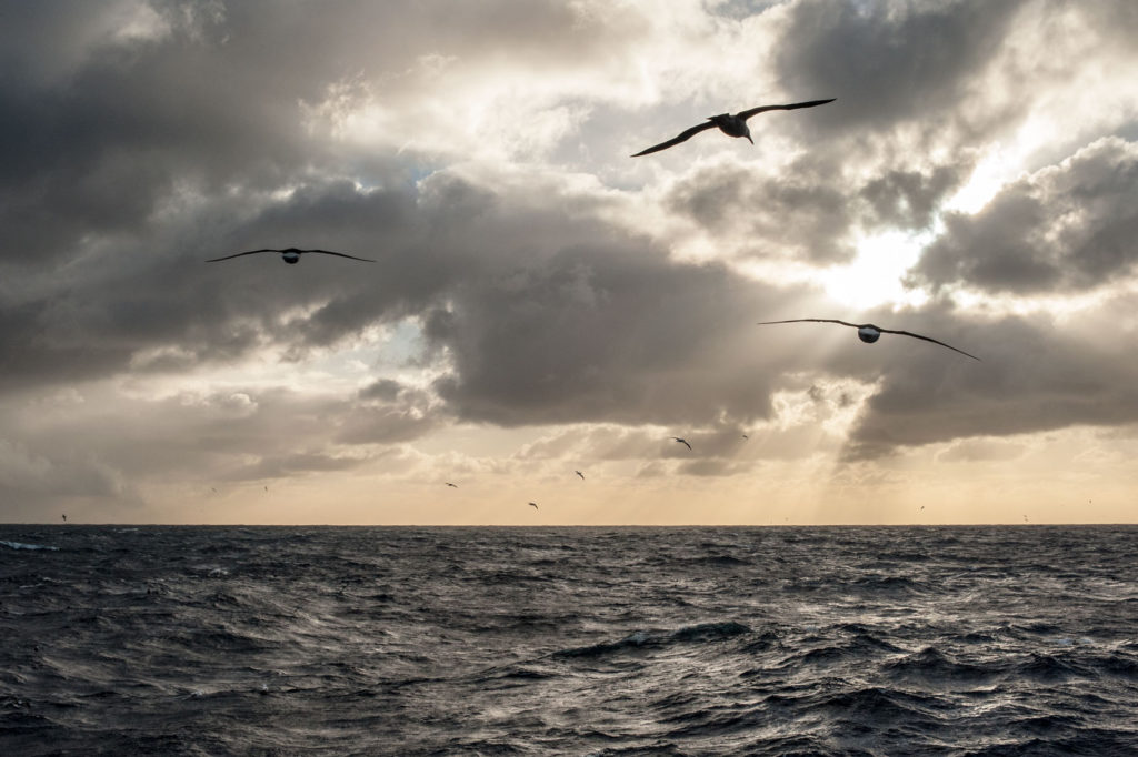 Operate-Seabird-Safety-slide-3628